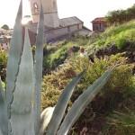 corniglia-kirch-kaktus