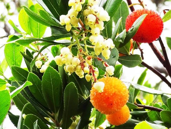 oranger-kugel-baum