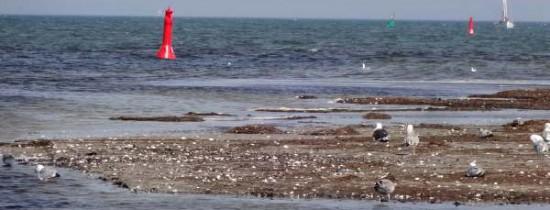 Video SY Safari: Von BArhöft nach Warnemünde